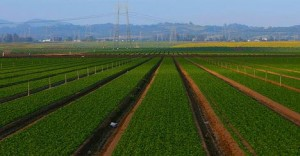 agriculture-impact-climate-change-monoculture-farm-photo
